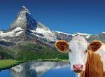 Švýcarsko - foto cestopis