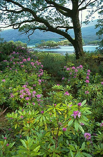 V národním parku Killarney