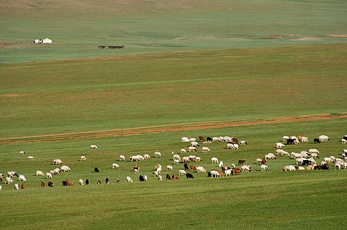 Stádo v mongolské stepi