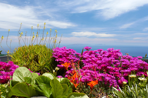 Ostrov květin