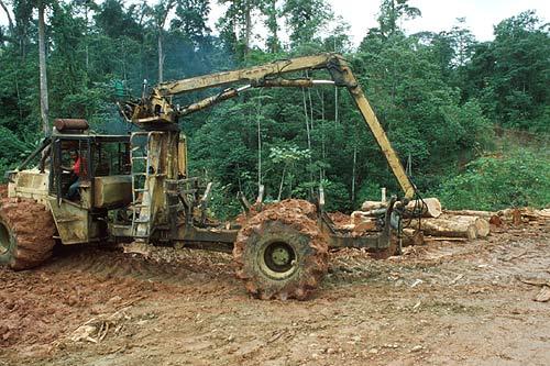 Těžba tropického dřeva