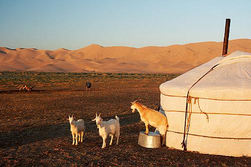 Kozy a vana na poušti