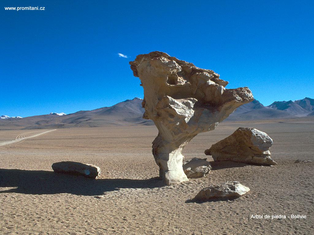 Arbol de piedra - Bolívie