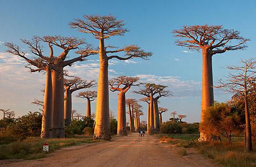 Madagaskar: Baobab Avenue
