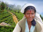 Srí Lanka - foto cestopis