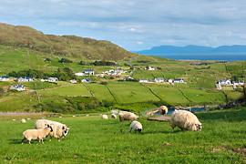 Zelené Irsko